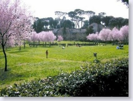 Roma. I pini di Villa Borghese