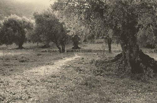 """""""Sopraluoghi in Lucania"""". Foto di Giovanna Gammarota"""